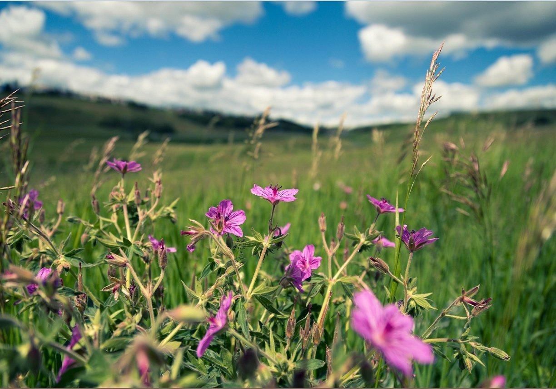 Photo Gallery_Stock- Flowers