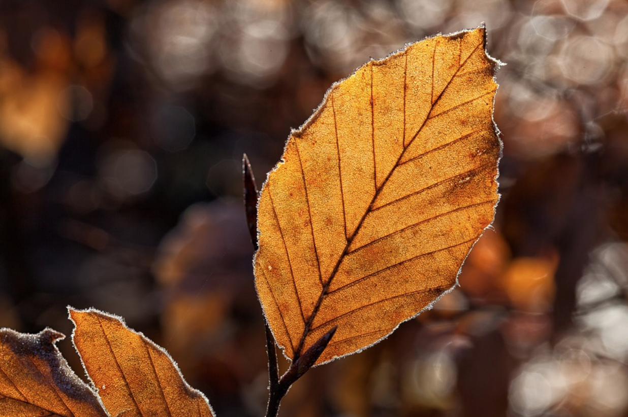 A Checklist for Autumn Home & Garden Maintenance